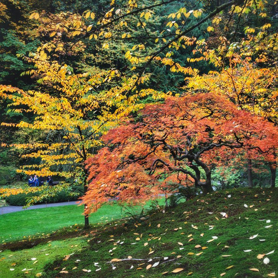 Beautiful fall colors provide a wondrous and peaceful atmosphere within the garden.