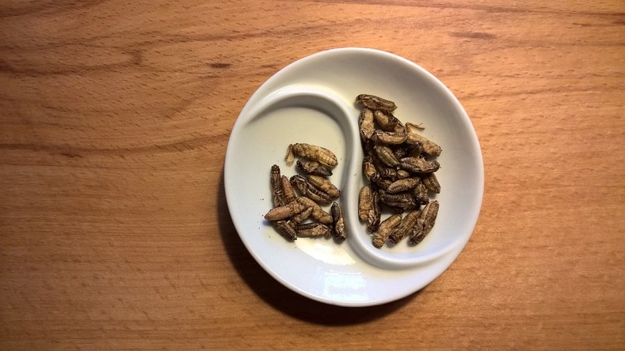 Why not eat crickets—or all bugs?