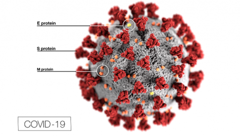 A diagram of the virus.